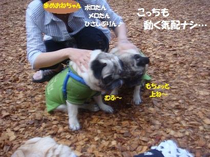DSC04438_20121014204130.jpg