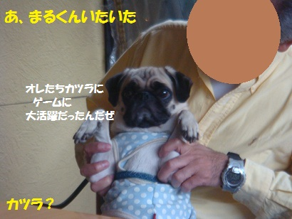 DSC04539_20121028025300.jpg
