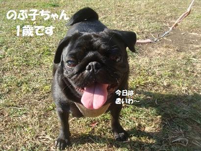 DSC04641_20121023231836.jpg