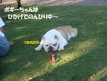 DSC04648_20121023231835.jpg