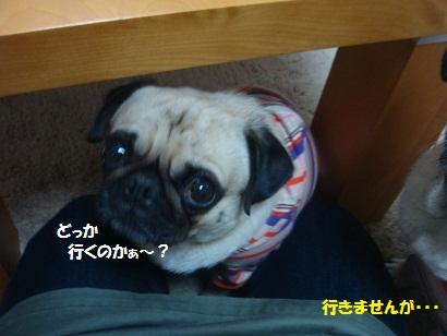 DSC04688_20121029140106.jpg