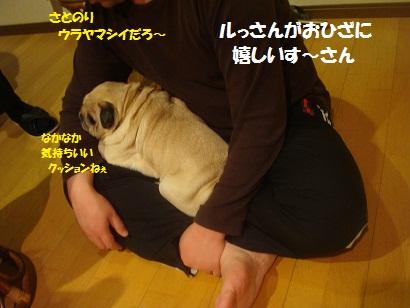 DSC04728_20121015190527.jpg