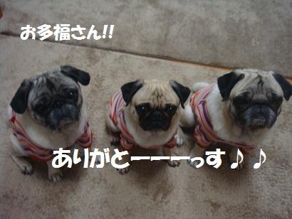 DSC04785_20121029130322.jpg