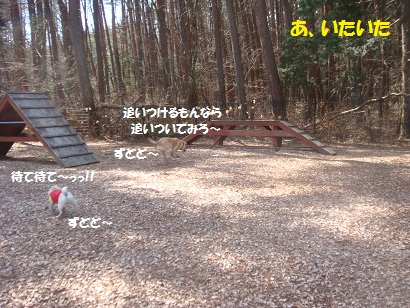 DSC04883_20121017132405.jpg