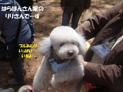 DSC04943_20121019202349.jpg