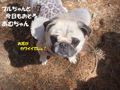 DSC04949_20121019202349.jpg