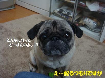 DSC05019_20121106194829.jpg