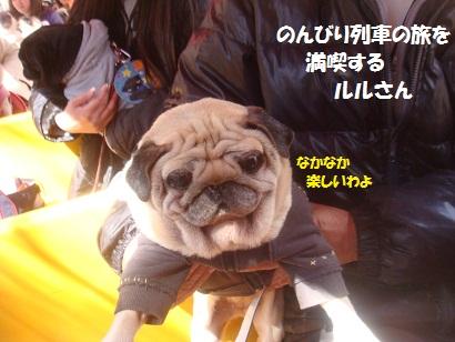 DSC05061_20121019233355.jpg
