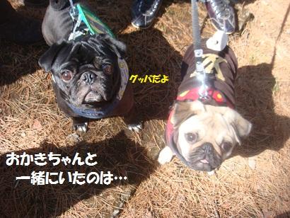 DSC05098_20121020012648.jpg