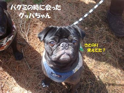 DSC05101_20121020012843.jpg