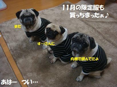 DSC05114_20121108220430.jpg