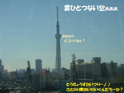 DSC05126_20121112184646.jpg