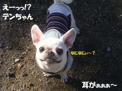 DSC05141_20121112193455.jpg