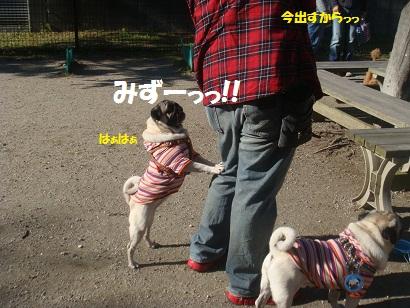 DSC05151_20121113200401.jpg