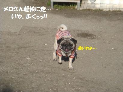 DSC05156_20121113200402.jpg