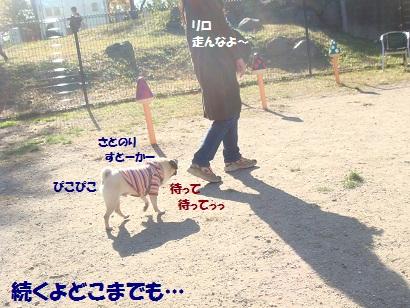 DSC05169_20121113200400.jpg