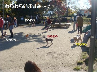 DSC05176_20121112193432.jpg