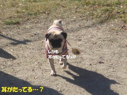 DSC05180_20121112193431.jpg