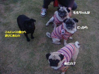 DSC05229_20121114011407.jpg