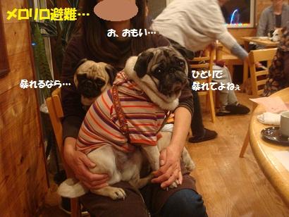 DSC05289_20121114192119.jpg
