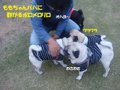 DSC05332_20121114202201.jpg