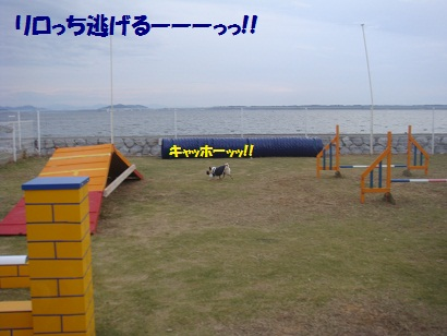 DSC05345_20121115051236.jpg