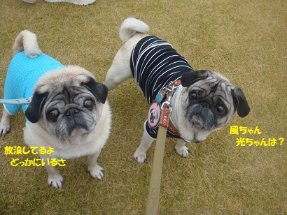 DSC05413_20121121192539.jpg