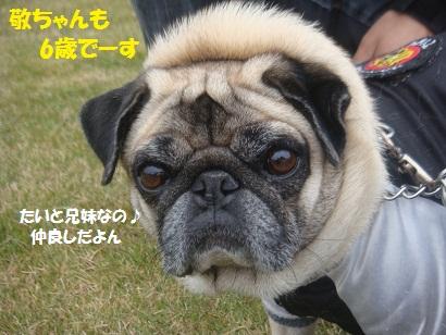 DSC05435_20121121045104.jpg