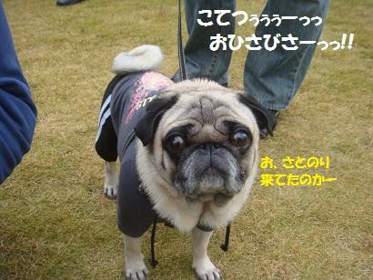 DSC05522_20121121205115.jpg