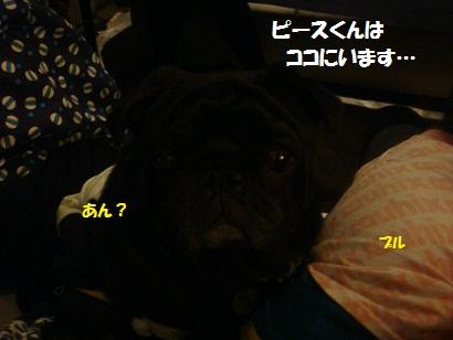 DSC05535_20121024180837.jpg