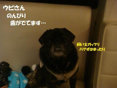 DSC05556_20121023173921.jpg