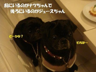 DSC05562_20121023174639.jpg