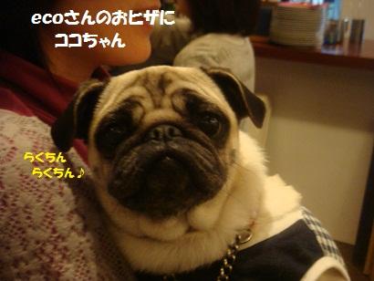 DSC05566_20121023173920.jpg