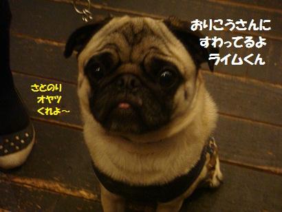 DSC05571_20121023173920.jpg