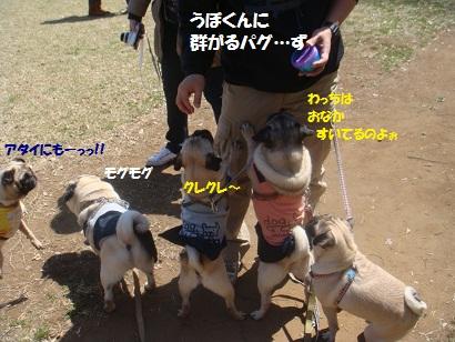 DSC05599_20121024011116.jpg