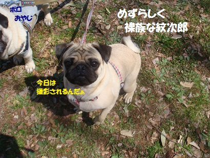 DSC05607_20121024004218.jpg