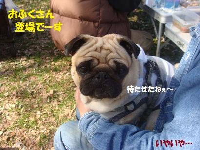 DSC05680_20121024005927.jpg