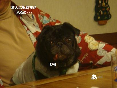 DSC05805_20121201165059.jpg