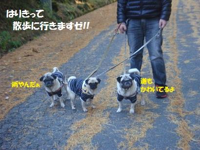 DSC05890_20121201172133.jpg