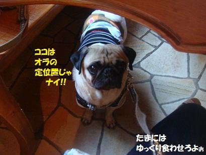 DSC05934_20121201175308.jpg