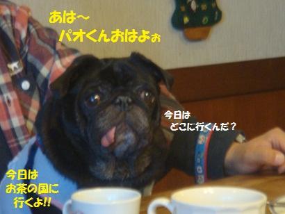 DSC05952_20121201175345.jpg