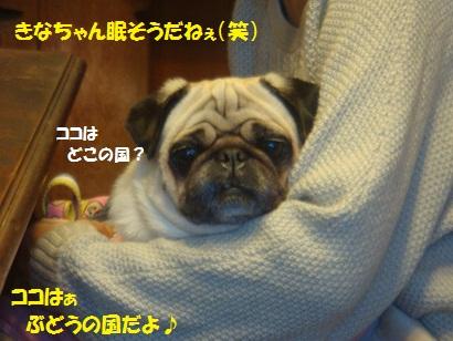 DSC05954.jpg
