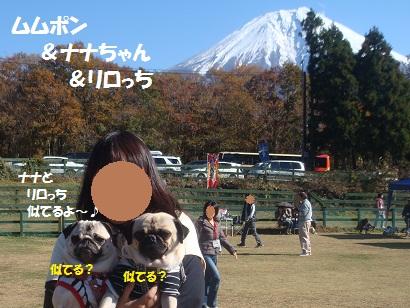 DSC05978_20121206141429.jpg