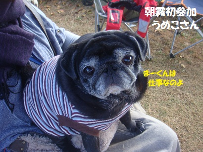 DSC06046_20121204031051.jpg