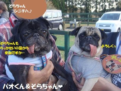 DSC06053_20121204032911.jpg
