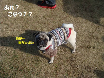 DSC06072_20121209010524.jpg
