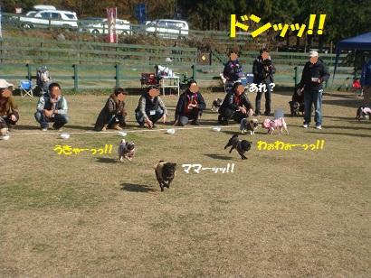 DSC06193_20121206204642.jpg