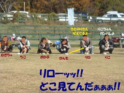DSC06197_20121206205337.jpg