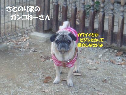 DSC06241_20140121202229ee8.jpg