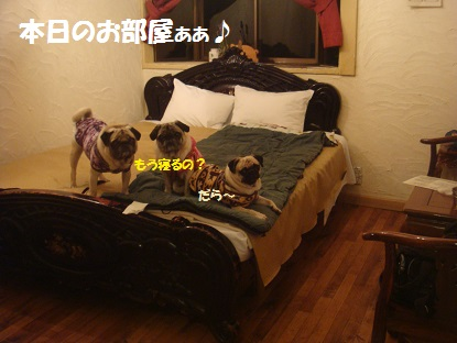 DSC06321_20140124202551dd3.jpg